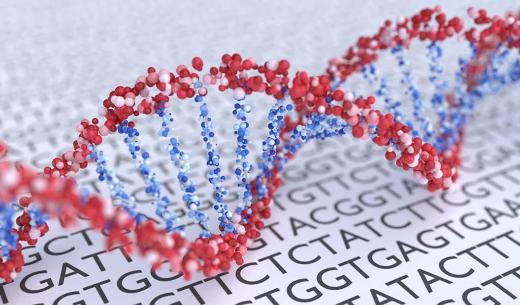 Desoxyribonukleinsäure, meist kurz als DNA bezeichnet